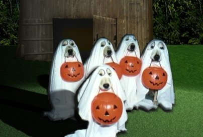 Ghostly Halloween Costumes For Dogs