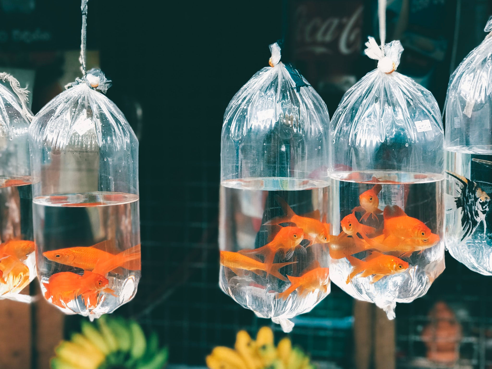 first-birthday-fish-party-favors