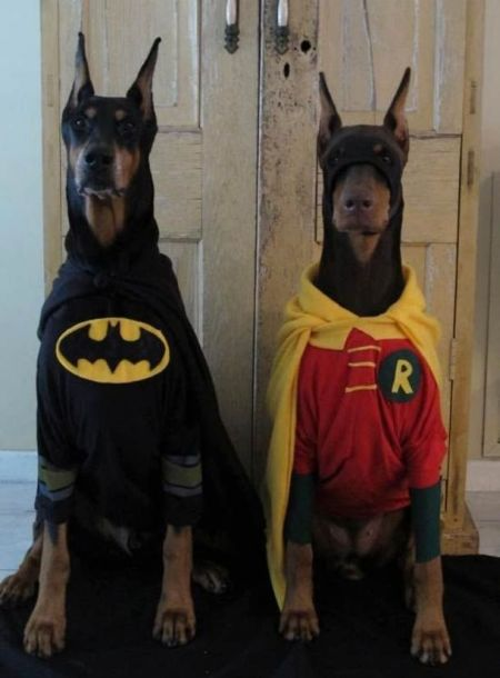 Batman And Robin Halloween Costumes For Dog