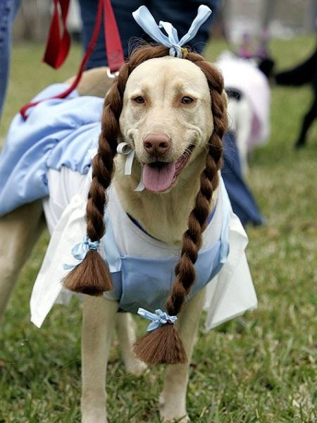 Wizard of Oz Halloween Costumes For Dog