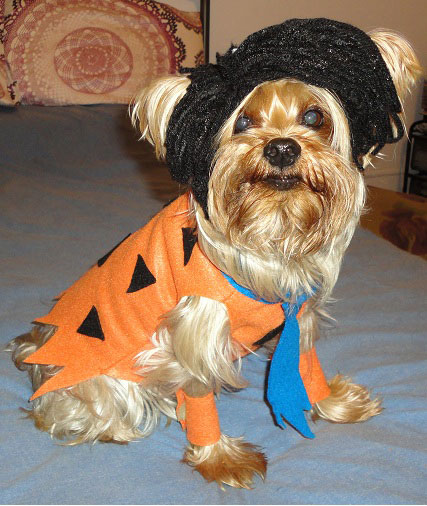 Fred Flintstone Halloween Costumes For Dog