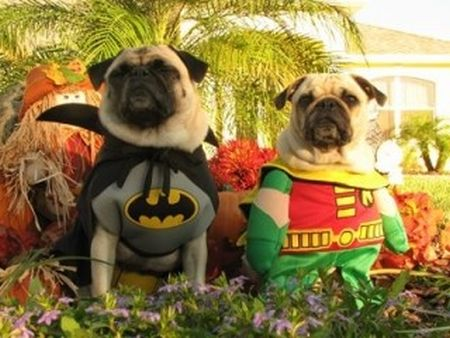 Batman And Robin Pet Costumes & Halloween Costume For Dogs