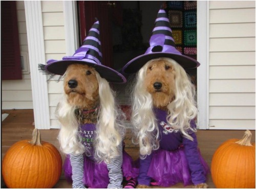 Woofing Witch Halloween Costumes For Dog