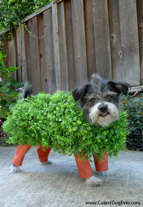 Chia Pet Halloween Costumes For Dog