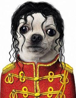 Michael Jackson Halloween Costume For Dogs