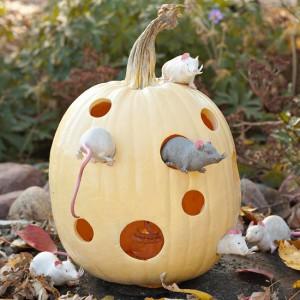Halloween Pumpkin Carving Ideas Inspiration