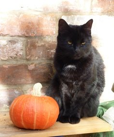 Fun Halloween Facts About Black Cats