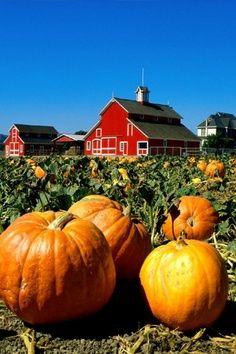 Halloween Pumpkin Fun Facts