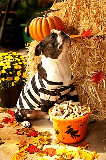 Jailbird Halloween Costumes For Dog